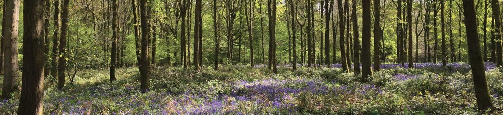 Help us with our support - become a member of Woodland Heritage today