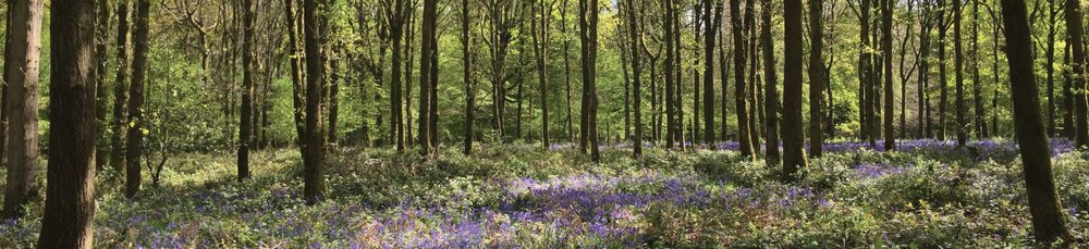 Become a member - join Woodland Heritage to take part in similar sustainable projects