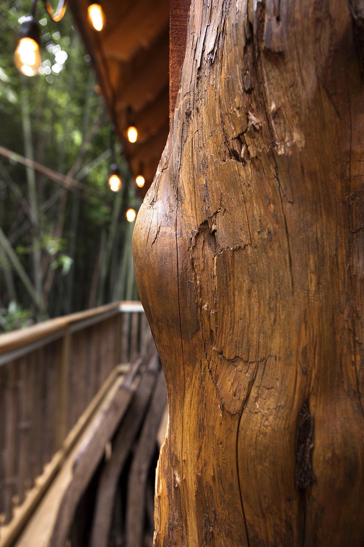 LindsayAppel-Treehouse-6