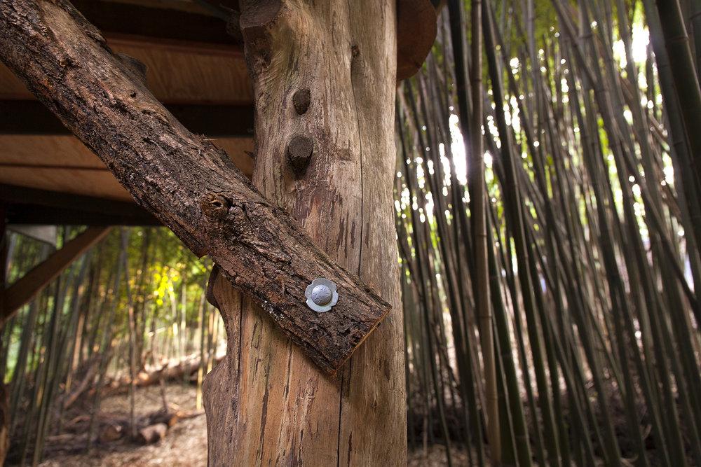 LindsayAppel-Treehouse-18