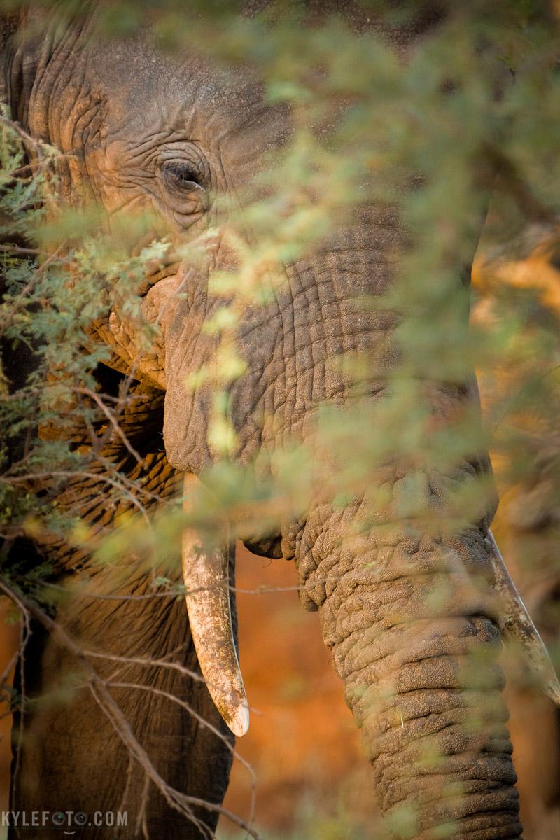 elephantsunrise-11.jpg