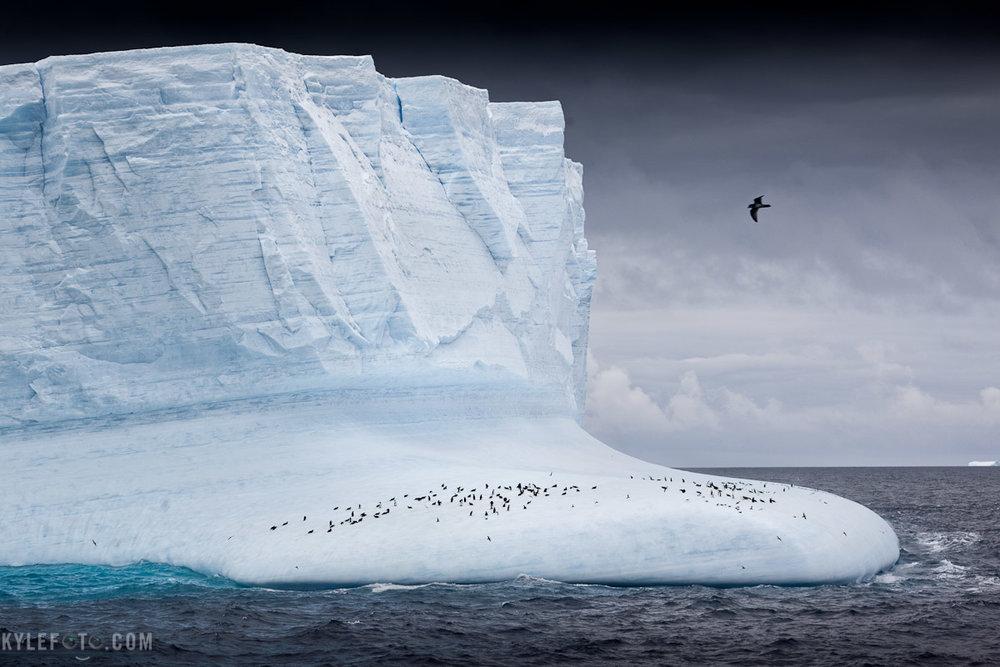 penguin-iceberg-1.jpg