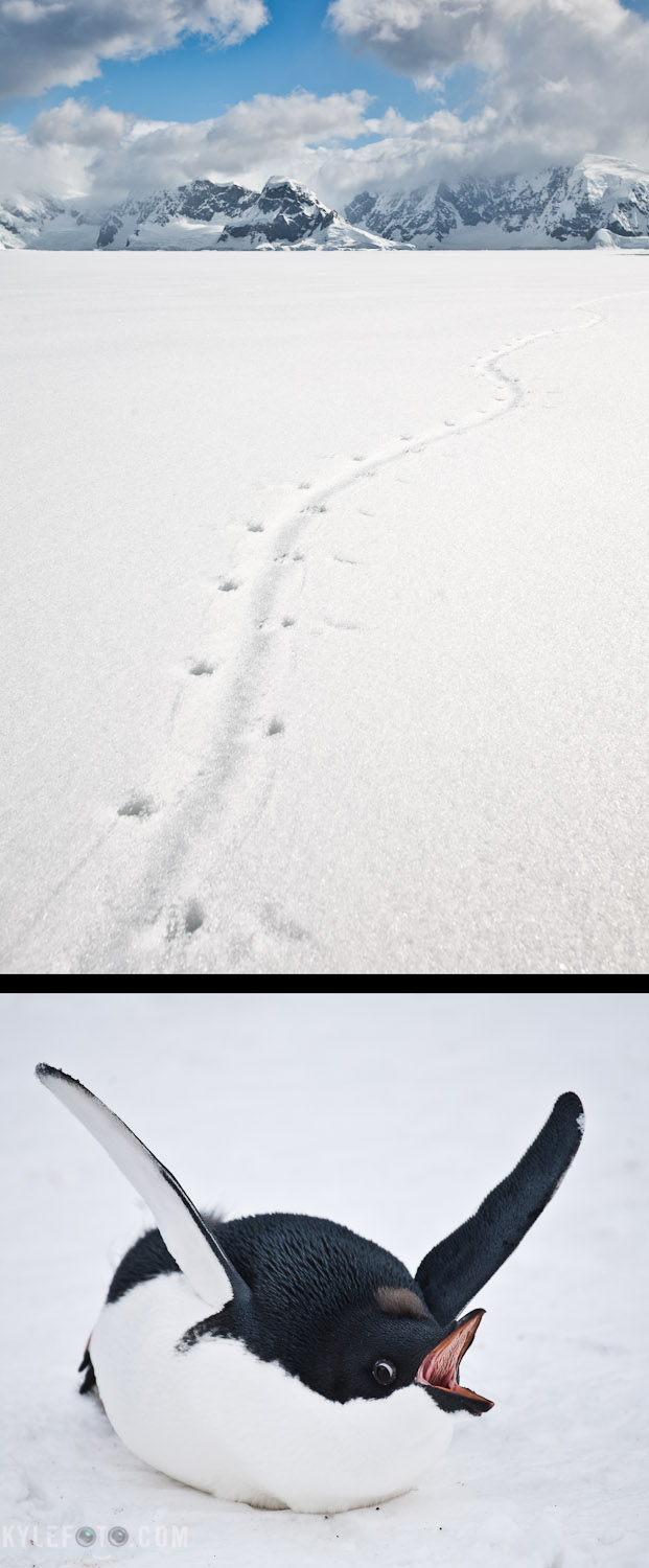 penguin-tracks-11.jpg
