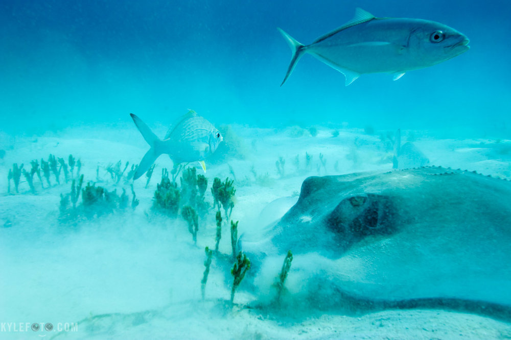 stingray-feeding-1.jpg