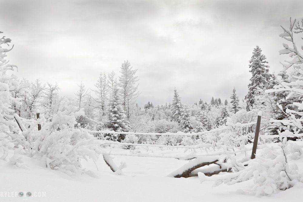 winter-wonderland-1.jpg