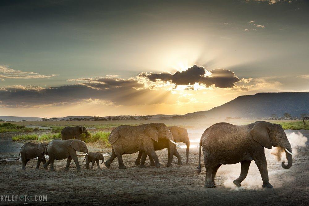 elephanthdr-12.jpg