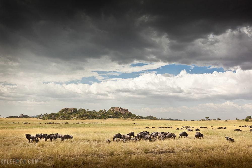 serengeti-1.jpg