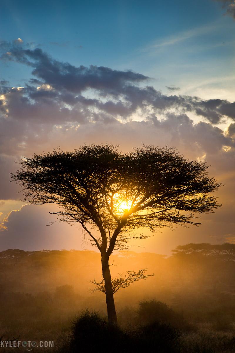 tree-silhouette-1.jpg