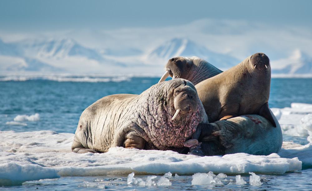 Arctic-3164.jpg