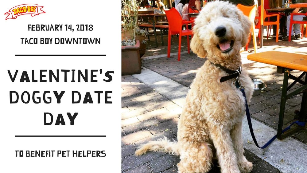 Valentine's Doggy Date Day