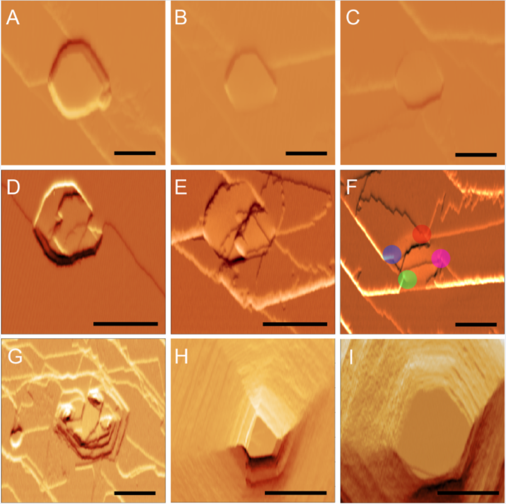 (A–F) AFM deflection error images acquired during real-time in situ growth of the l-cystine {0001} face in supersaturated solution; (G–I) AFM images of the same region during dissolution in undersaturated solution