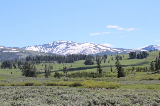 Montana. aka, Home .