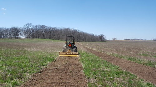 Preparing the rows the week before. The bare ground is now seeded with clover to restore forage value, hold the soil in place and minimize competition from taller plants around the trees.