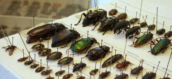 bugs-on-pins.jpg