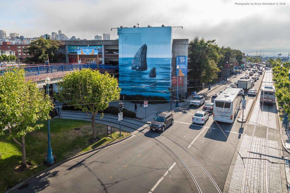 """Spyhopping Gray Whale"" mural | San Francisco, California"