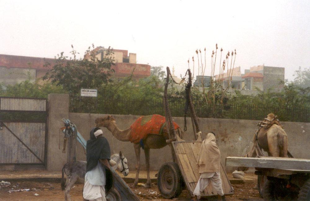 camel in coat.jpg
