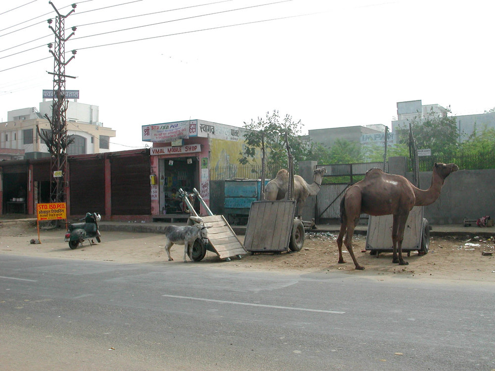 donkey and camels.jpg