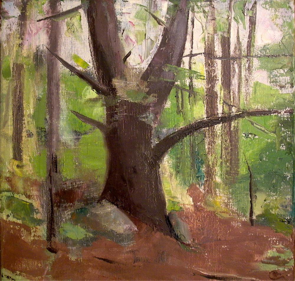 "Pine Tree Trunk, 14"" x 14"", oil on linen"