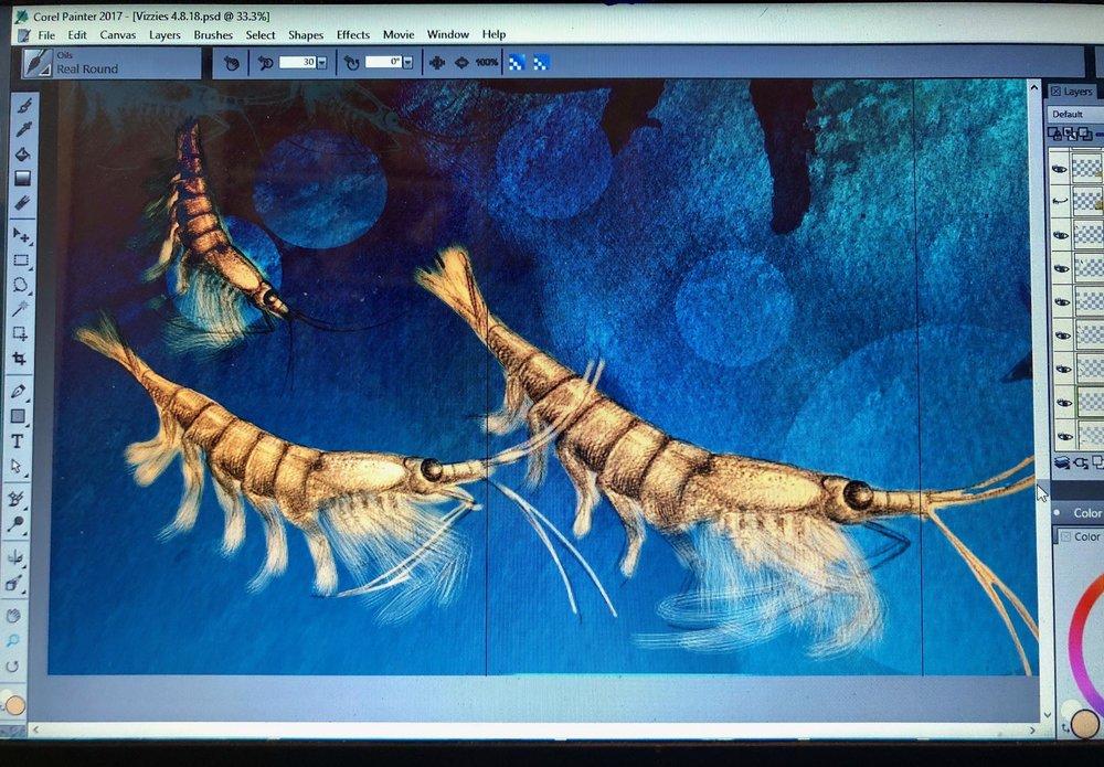 krill1.jpg