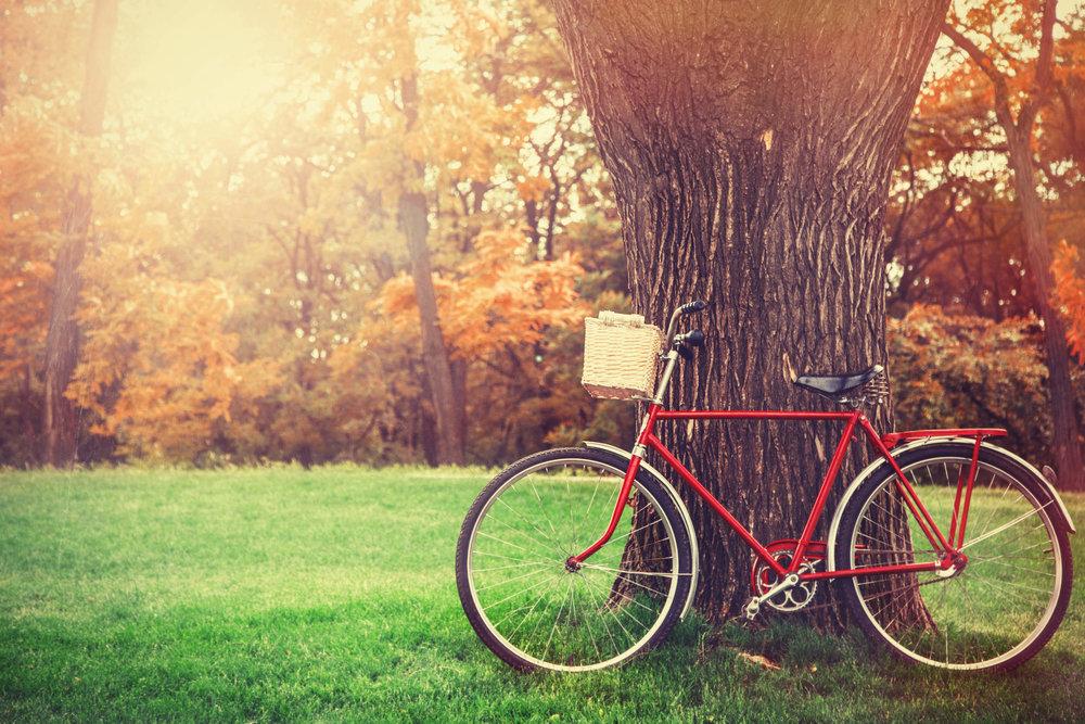 Paseo en Bicicleta - Una forma diferente de conocer la hacienda y sus alrededores, es un buen paseo en bicicleta. No tiene costo adicional.