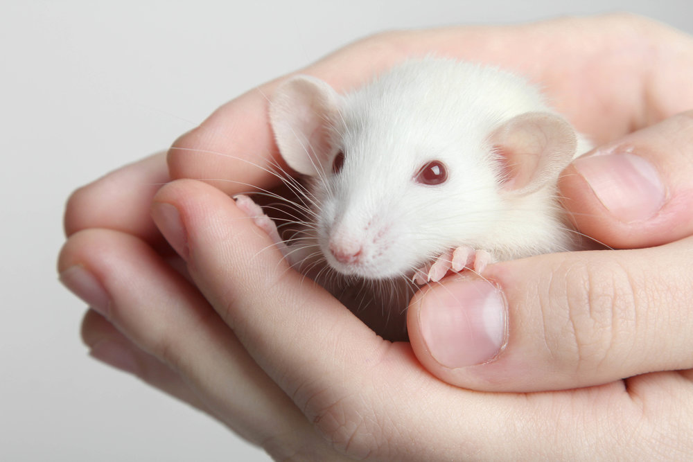 Cute mouse!!!