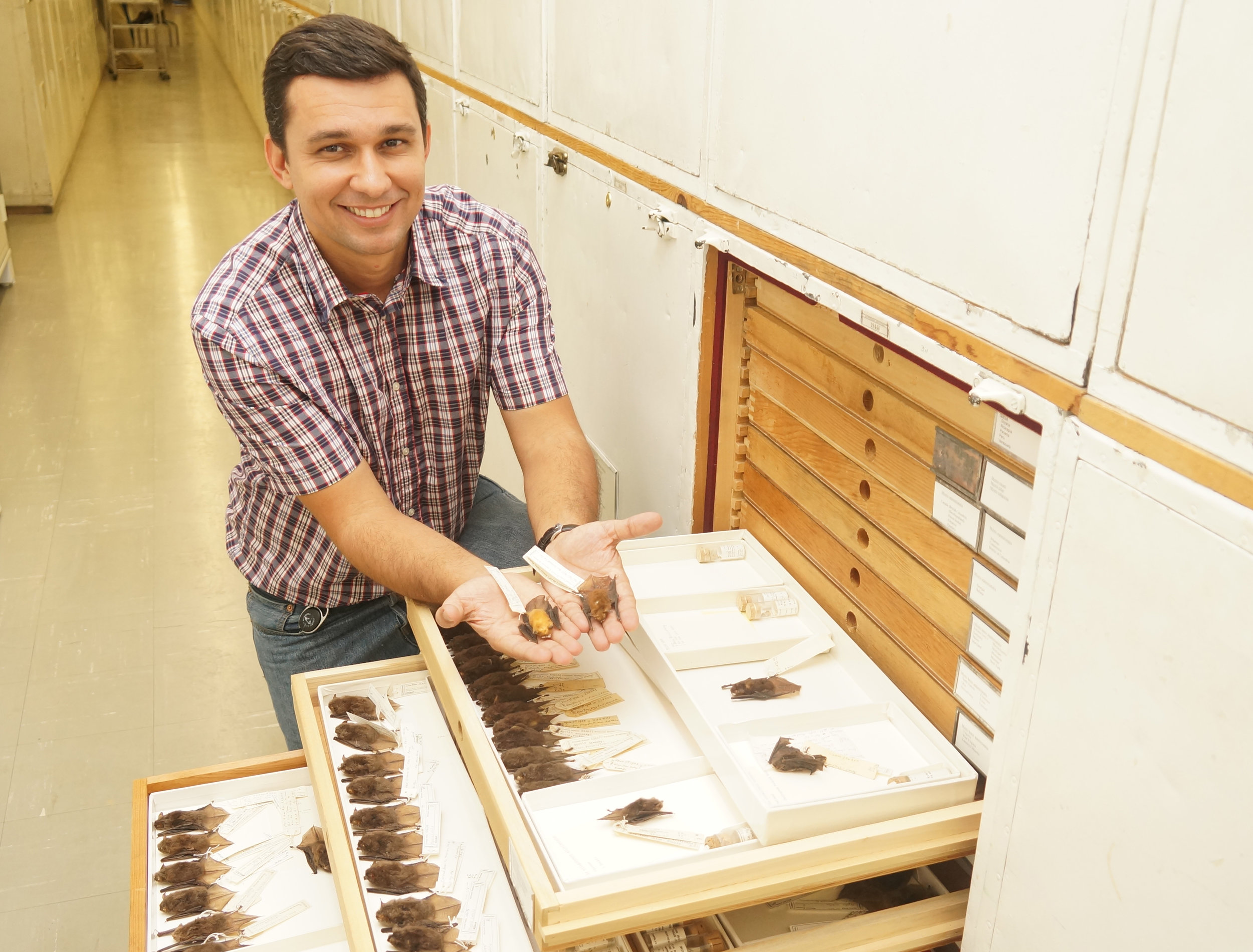 Ricardo Moratelli, a scientist at the Oswaldo Cruz Foundation (Brazil) and post-doctoral fellow at Smithsonian's National Museum of Natural History.