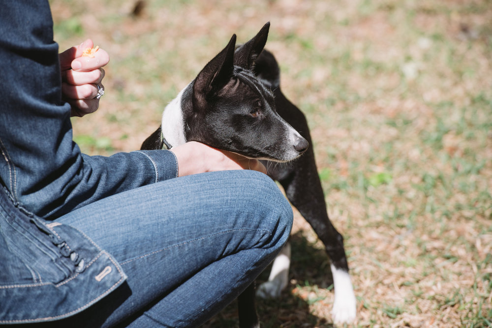 Resources - Looking for tips to explain your dog's behavior or body language? Check out these sources that are dedicated to providing you with easy to understand and accurate information. Learn More