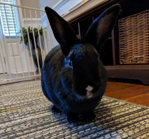 Meet Sammy