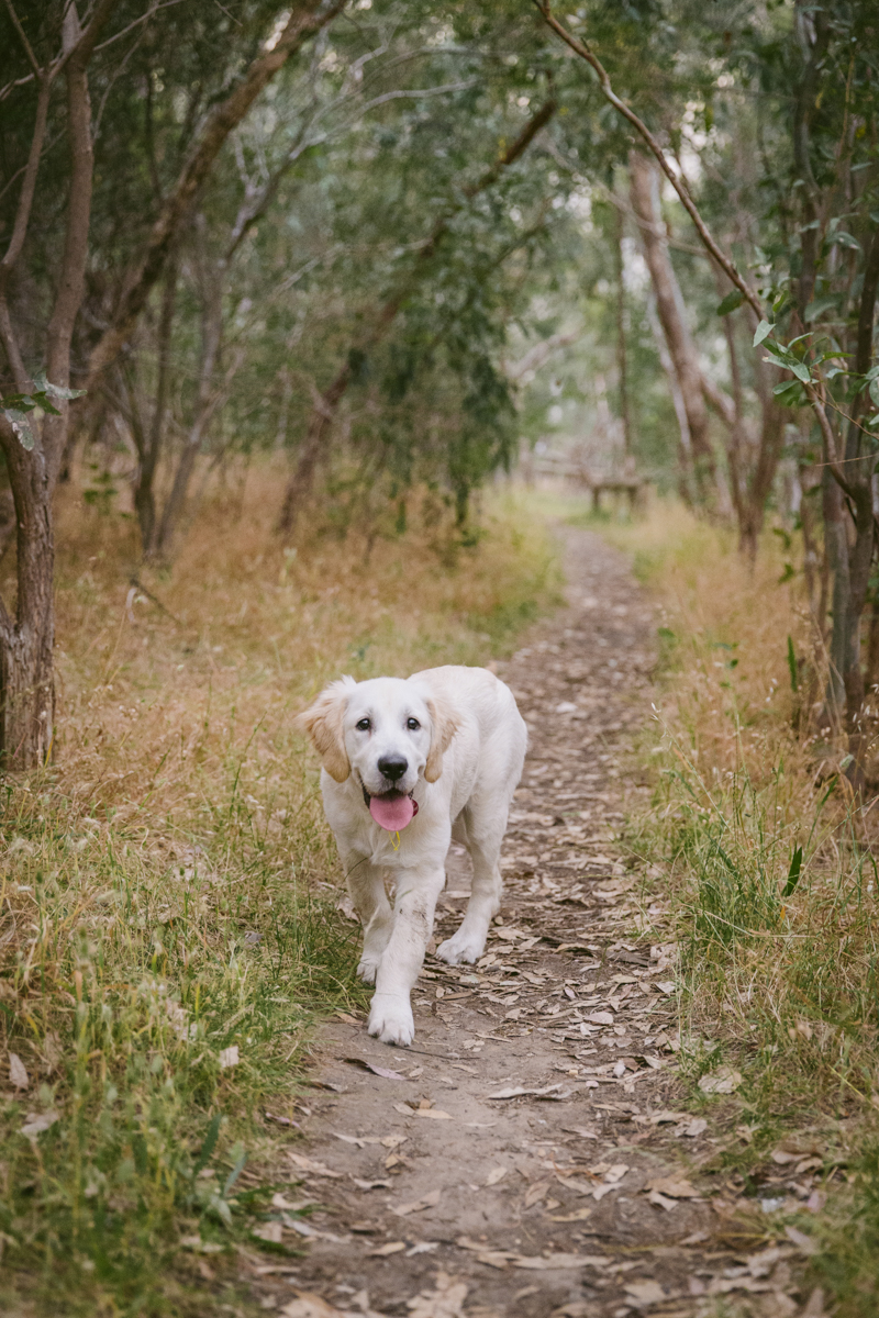 hound_in_hand_adelaide_pet_photography_aster