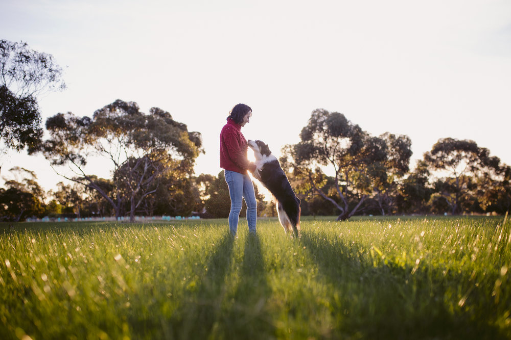 hound_in_hand_adelaide_pet_photography_kanji