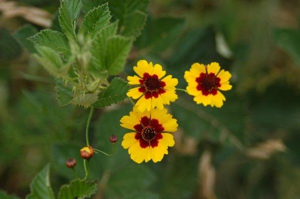 KR flowers.jpg