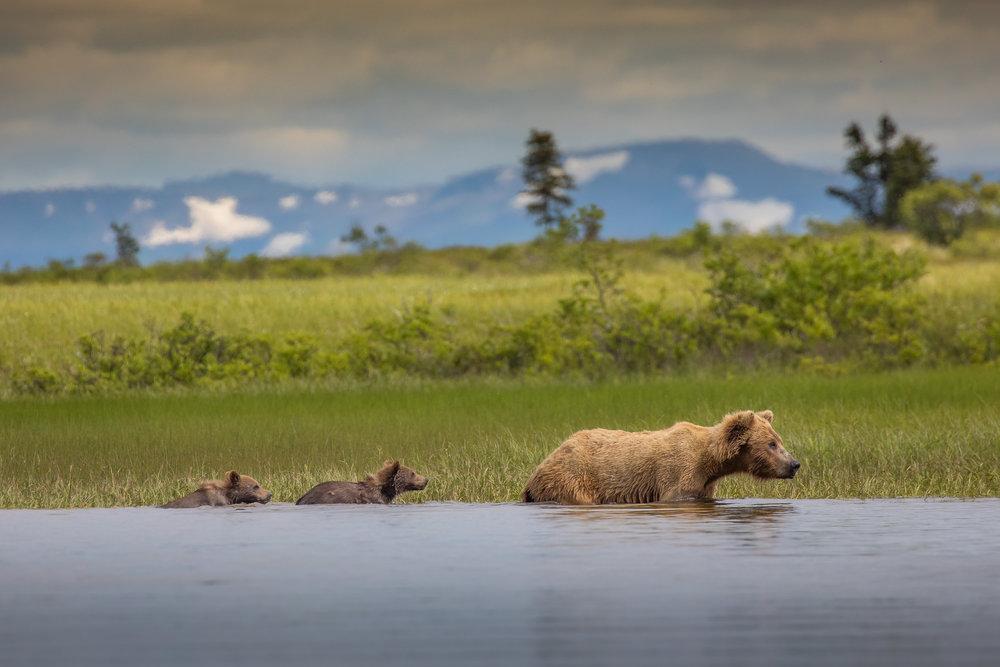 Big Ku Lodge - In the heart of wild alaska