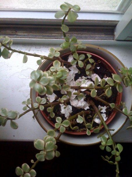plant reach.jpg