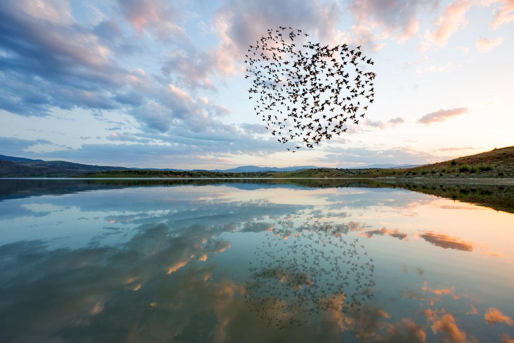 BirdsinHeart.jpeg
