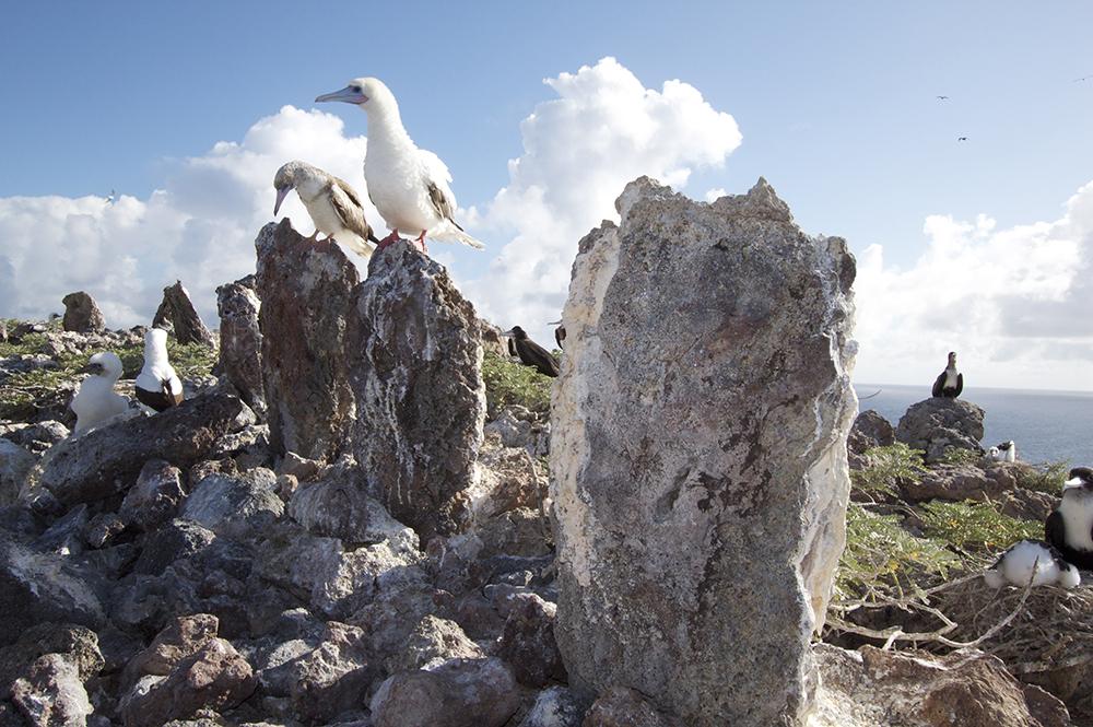 Island in Papahānaumokuākea © Kaleomanuiwa Wong