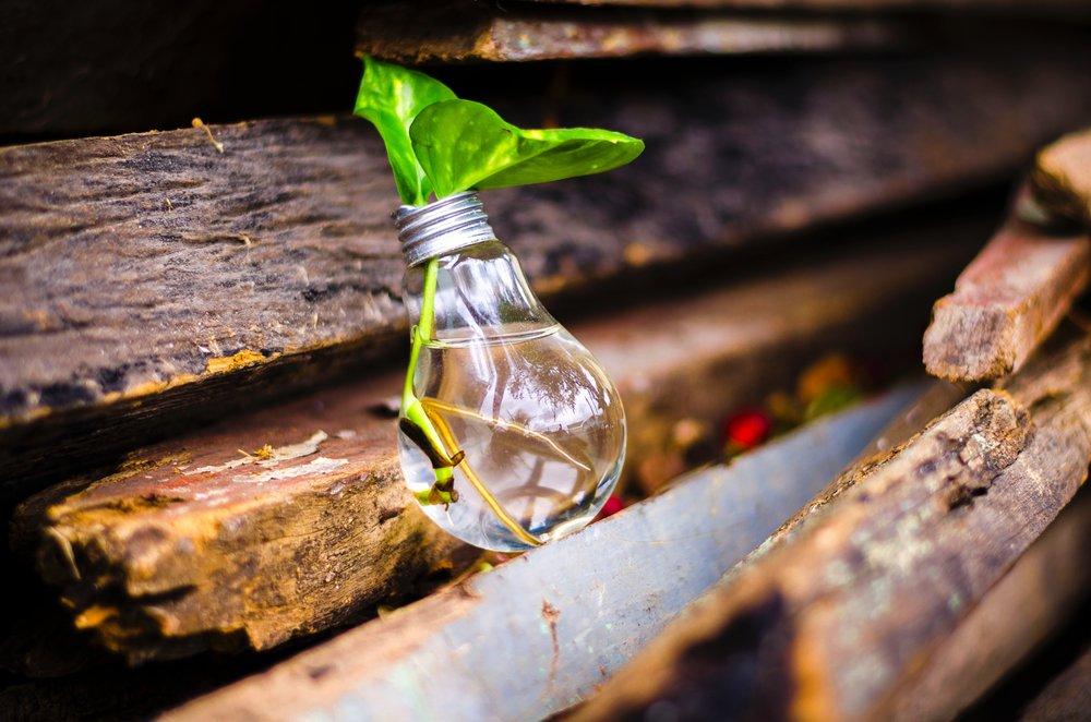 Plant_in_Lightbulb