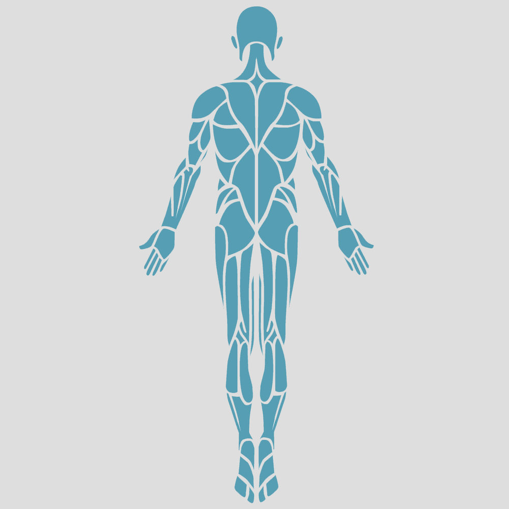 Muscular Issues   Inactive leg and back muscles can become weaker and reduce the ability to sit straight.