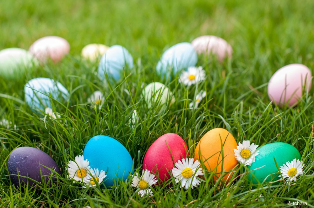SPRING ACTIVITIES FOR ALL AGES -