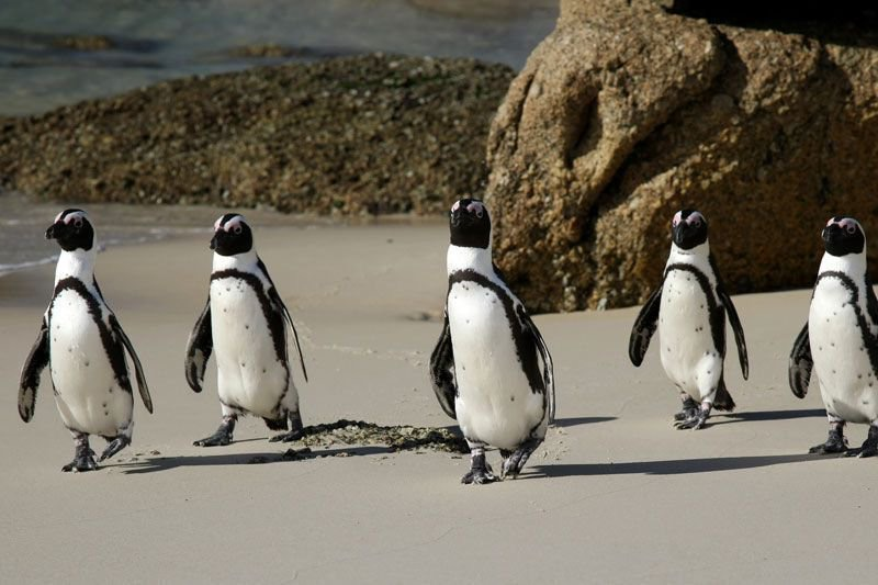PENINSULA BOUNCE TOUR - 1 Day. 3 Activities. A day of truly breathtaking scenery. We'll cruise along unspoiled coastline from Cape Town to Simons Town. You'll have the chance to make friends with a Penguin or two.FROM R1 500 PPVIEW THIS TOUR