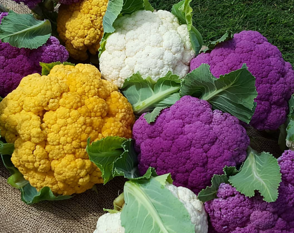 caulis colourful.PNG