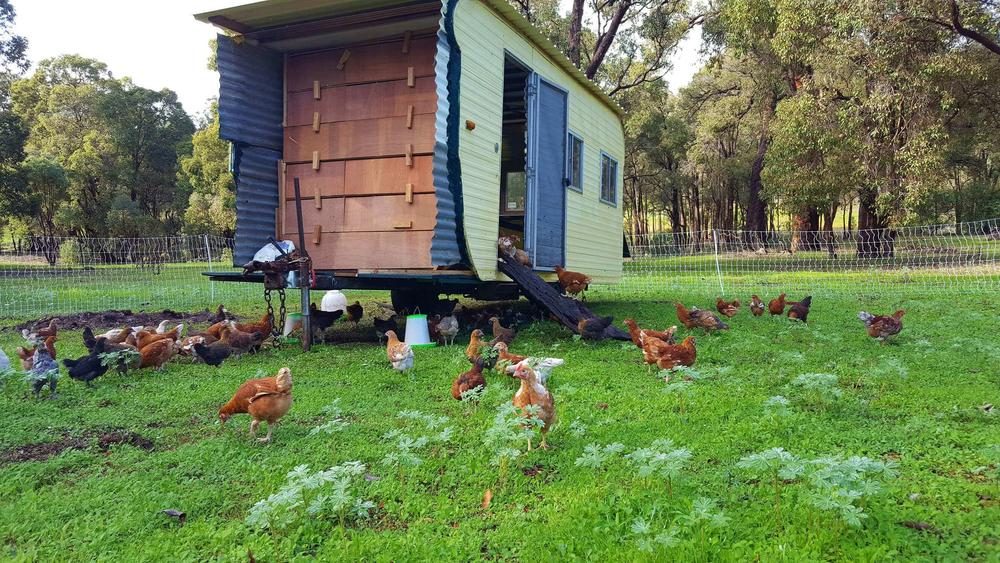 chickens caravan 2.png