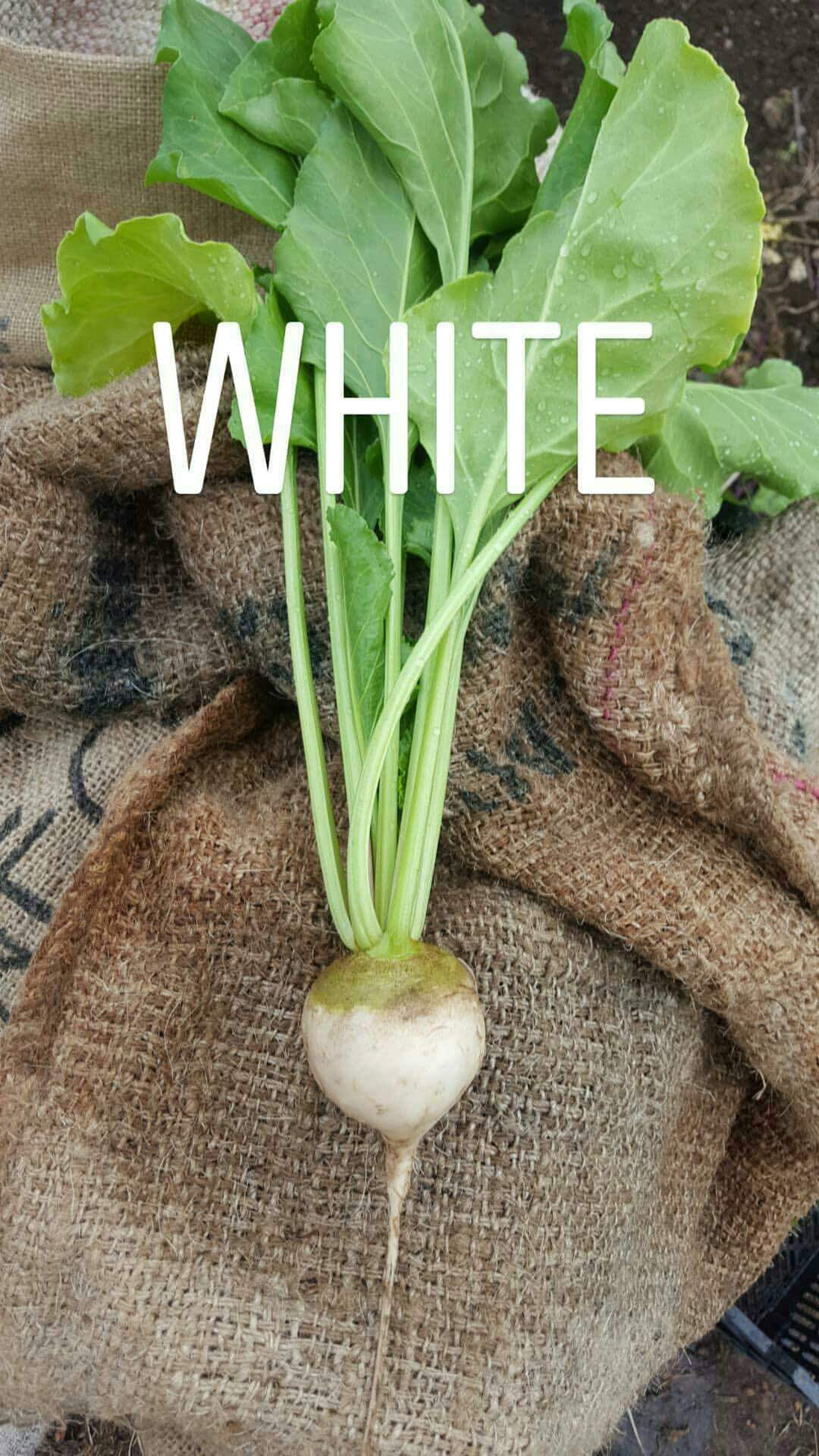 white.png