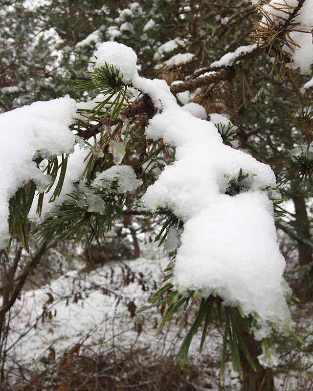 Nice and snowy.