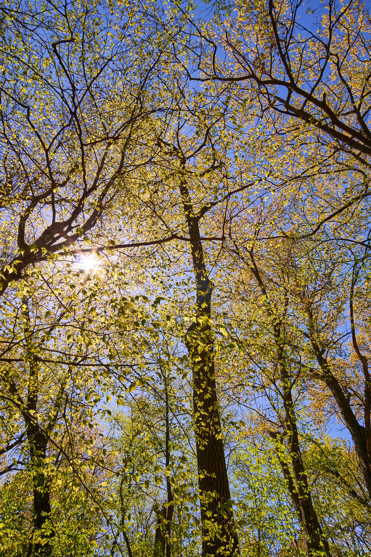 CL_trees1.jpg