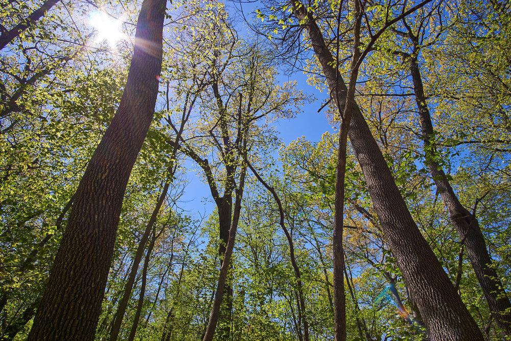 CL_trees3.jpg