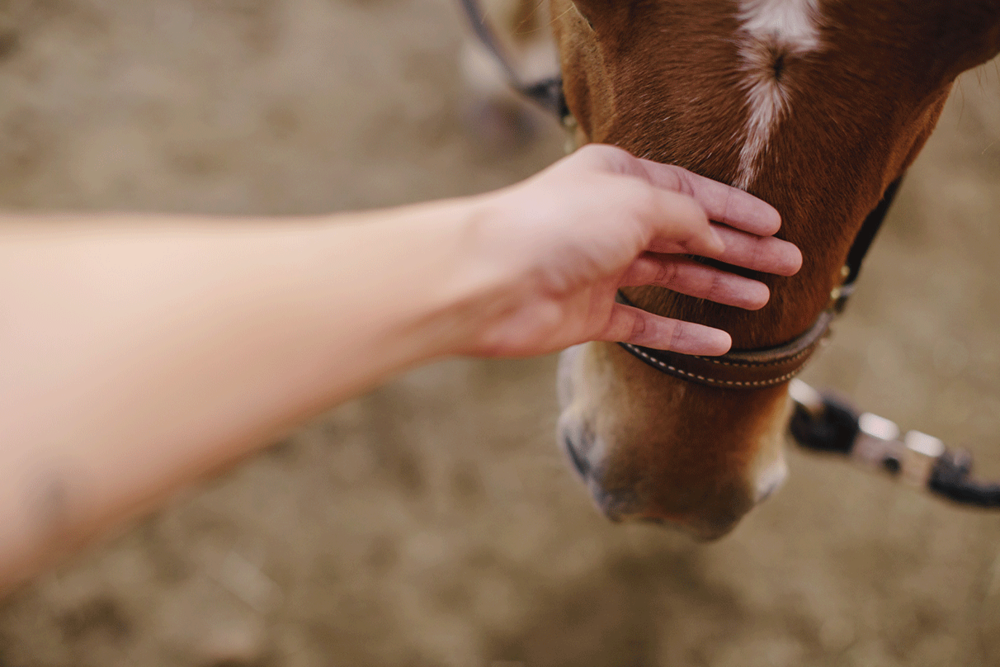 Using equine assisted therapy to enrich the lives of people with disabilities.