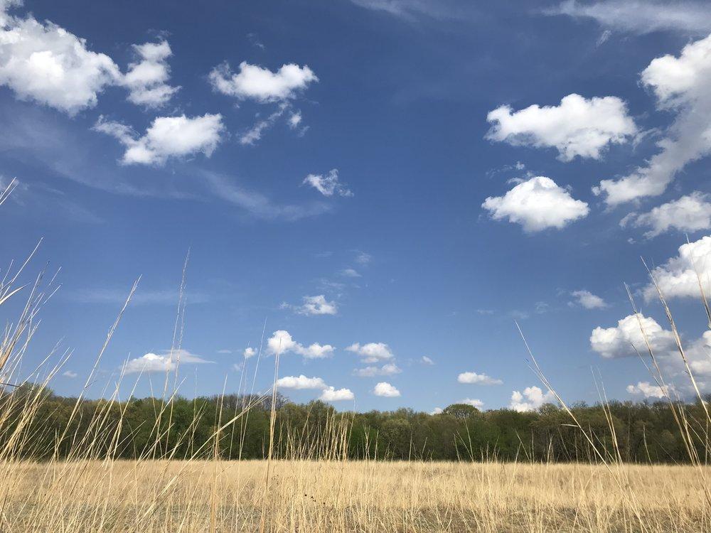 Green Oaks' restored prairie