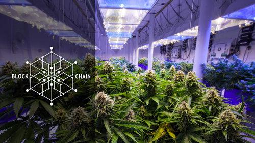 Blockchain for cannabis supply chain.jpeg