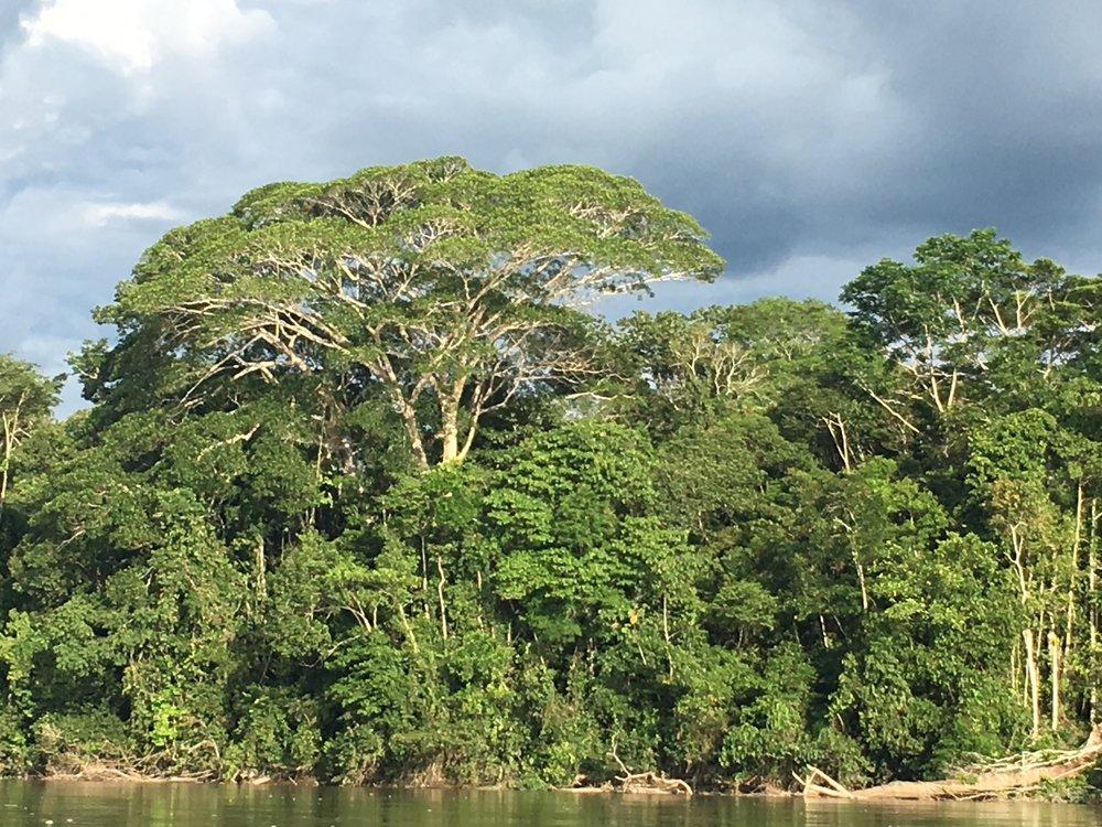 Amazon river view.JPG