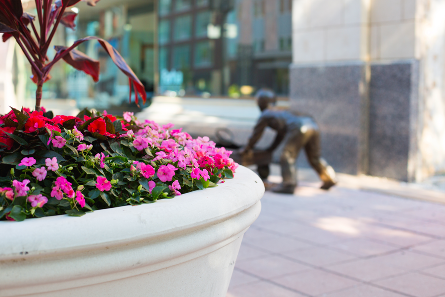 Flowers-on-Douglas-2.png